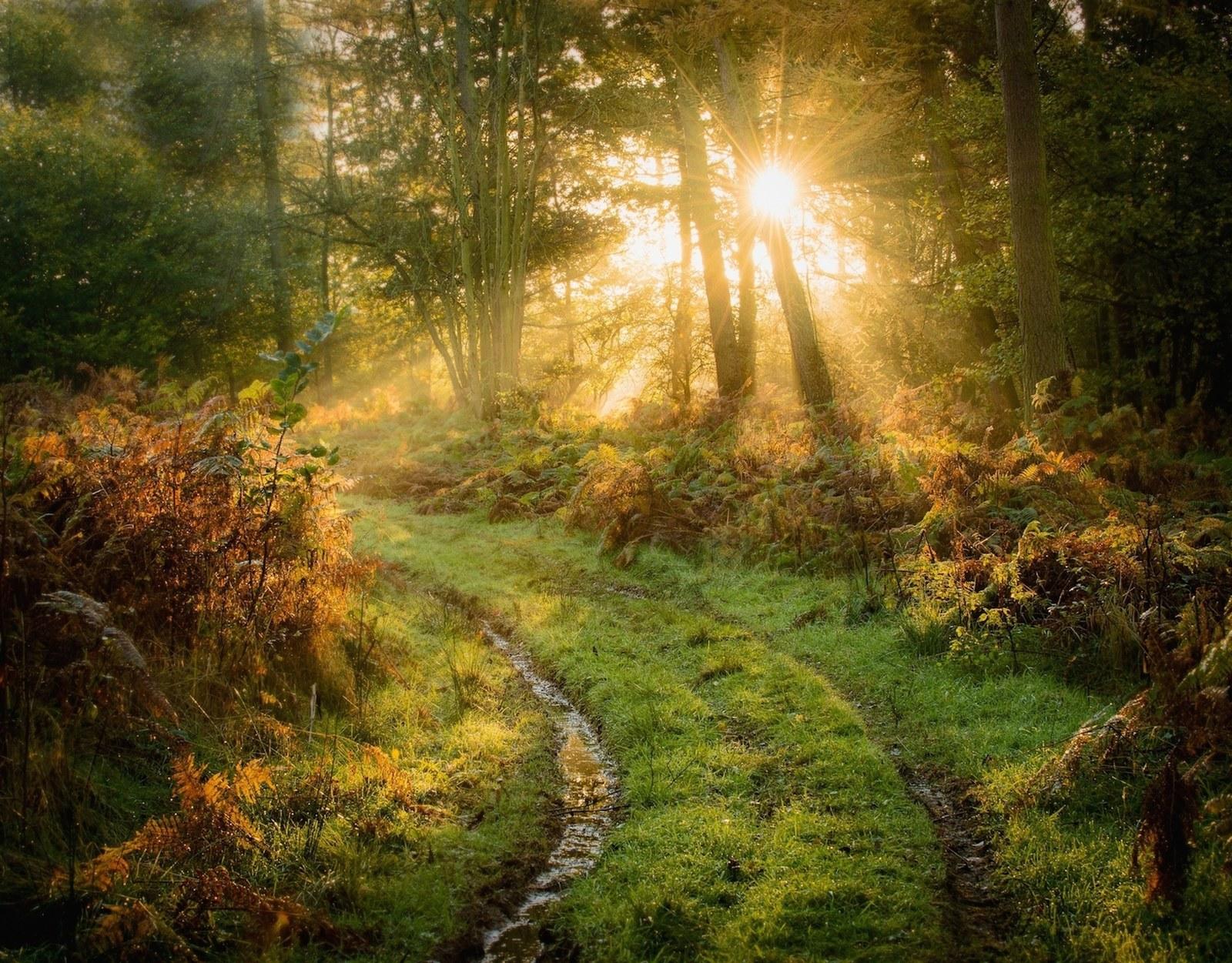 Природні джерела світла фото 24 фотография
